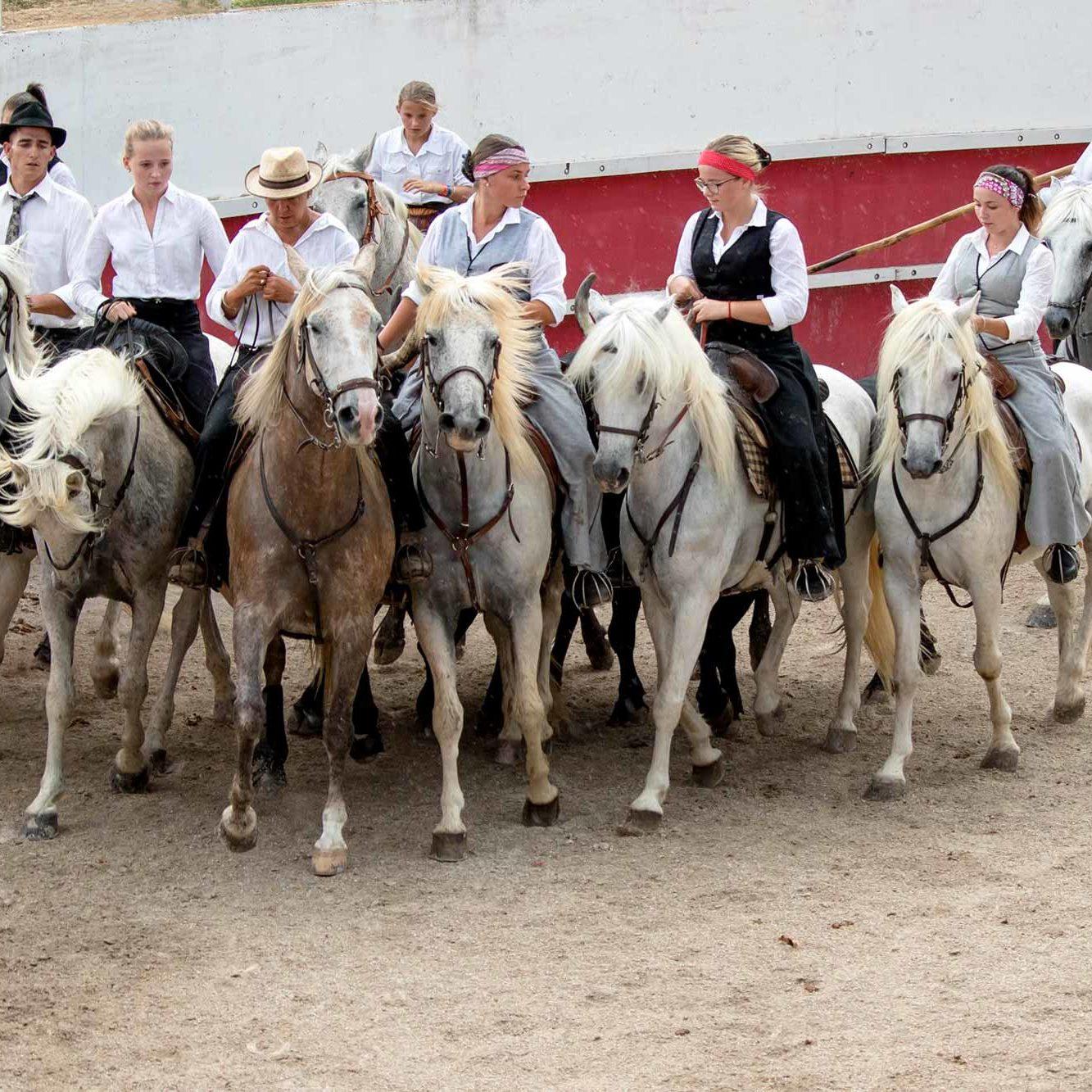 domaine-fangouse-manade-elevage-taureaux-chevaux-camargue-location-salle-mariage-evenements-caleche-lattes-perols-montpellier-mauguio-occitanie-bouches-rhone-visuel-1